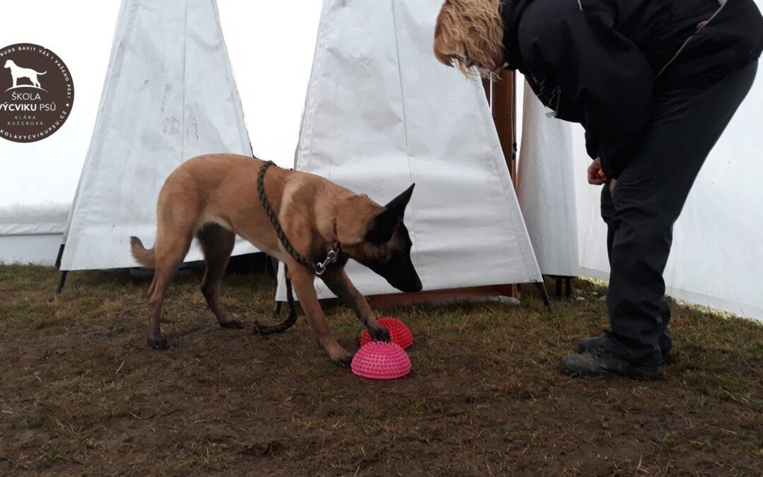 Balanční pomůcky pro psy