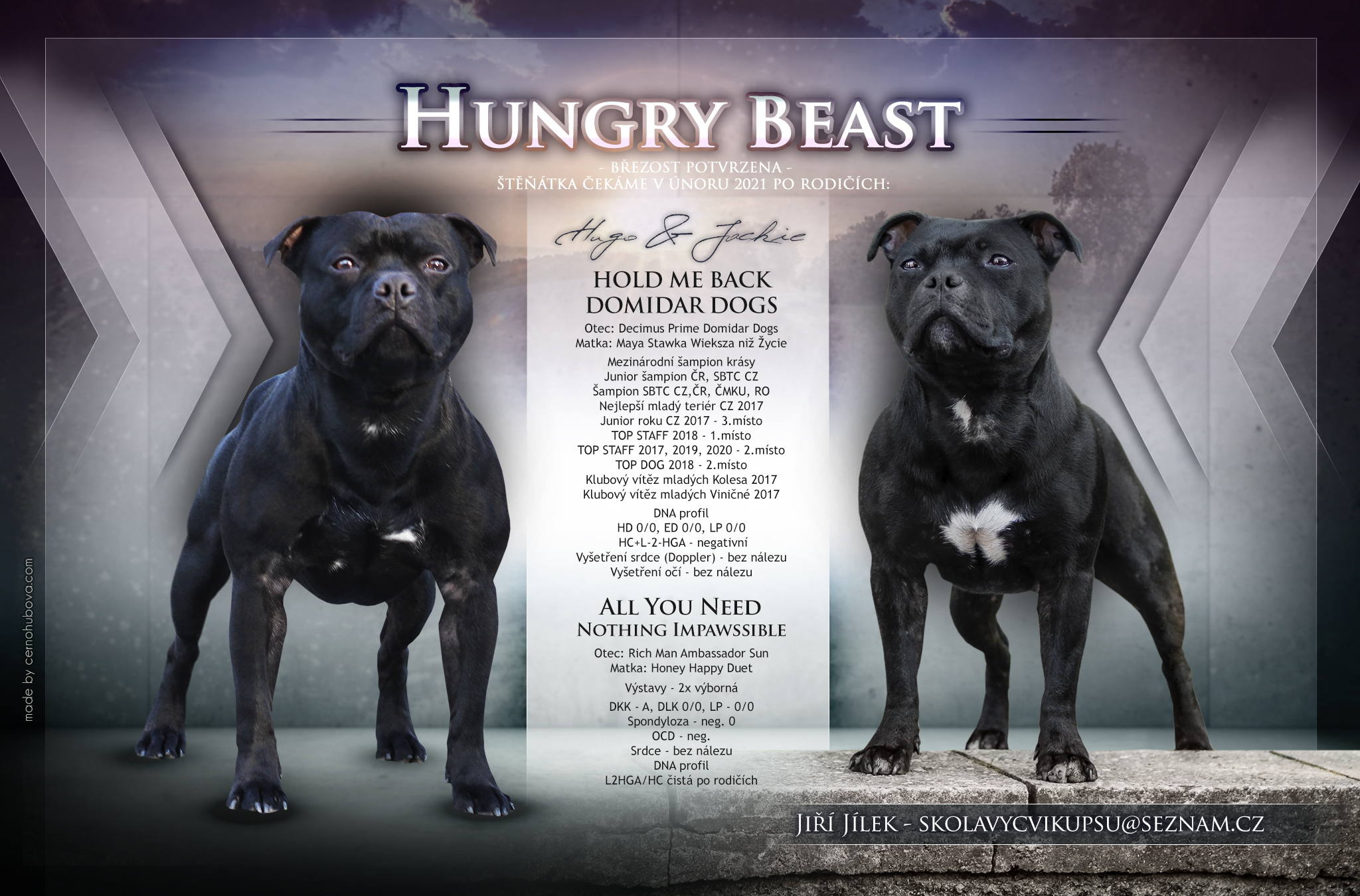hungry beast štěňata k prodeji stafbul zdravá výchova výstavy výcvikové lekce