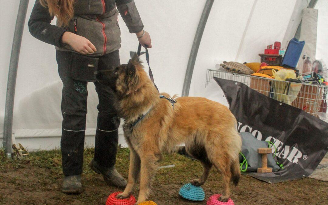 Jak začít s dogfitness