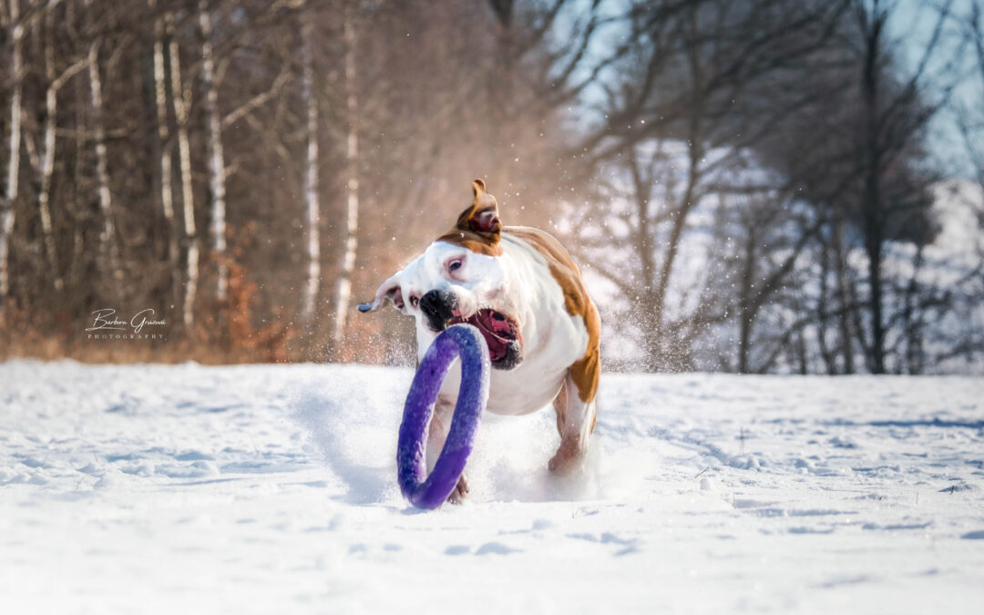 Pes a jeho zákus
