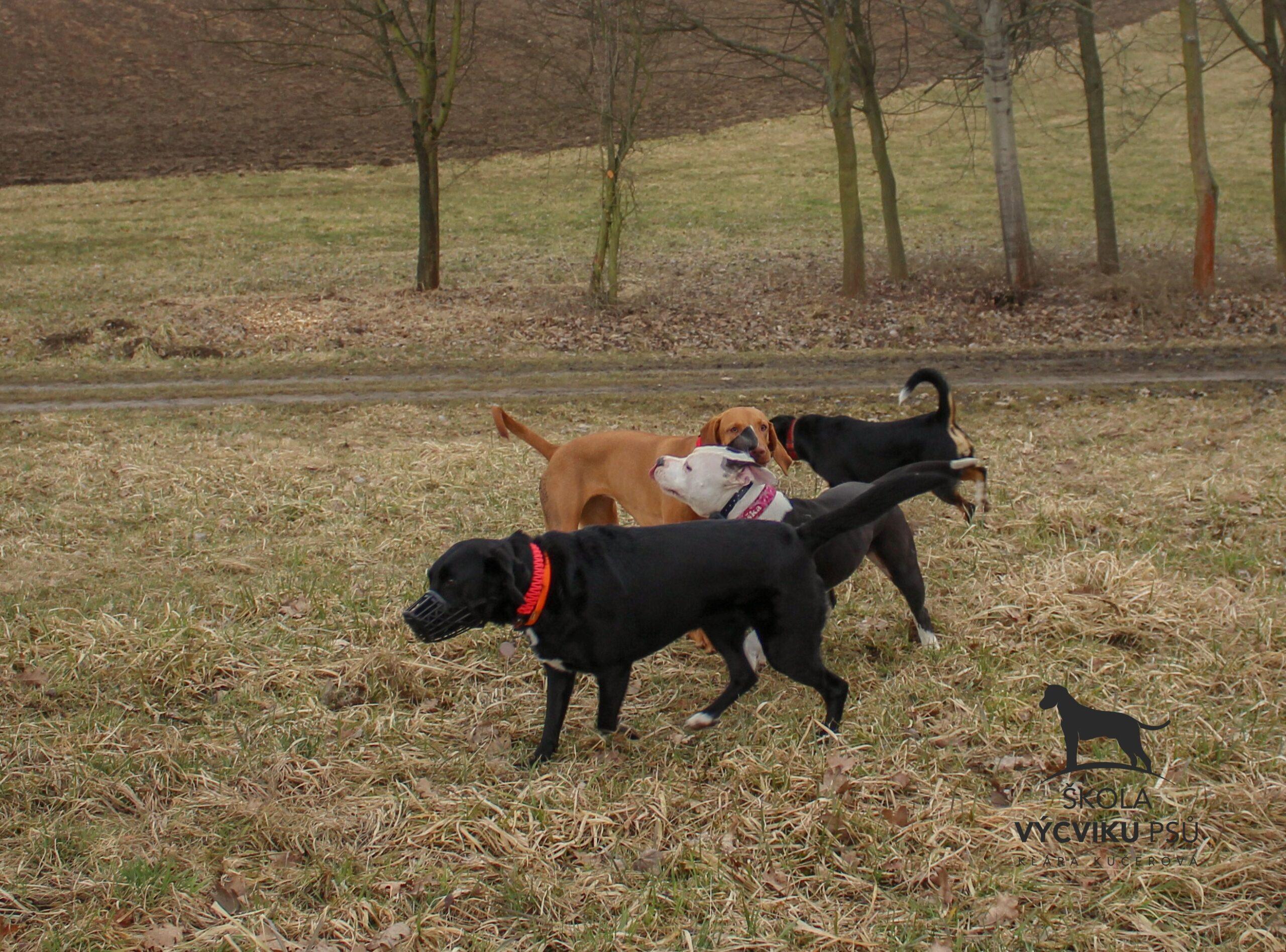 Strachová agrese chovat pokousaný pes problémovým chováním jak cvičit pomoc