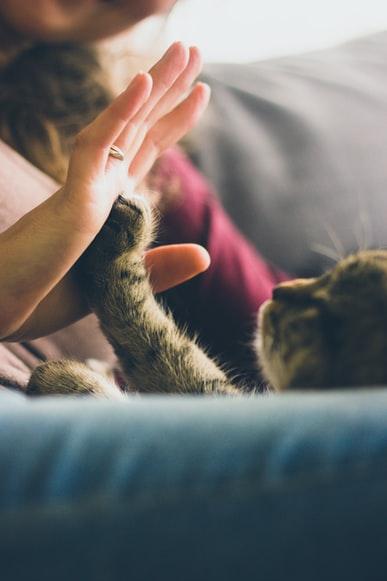 Kočky Mohelnice – pomoc
